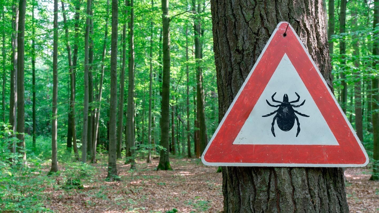 Zecken-Impfung: An einem Baum im Wald hängt ein Achtung-Verkehrsschild, auf dem eine Zecke abgebildet ist.